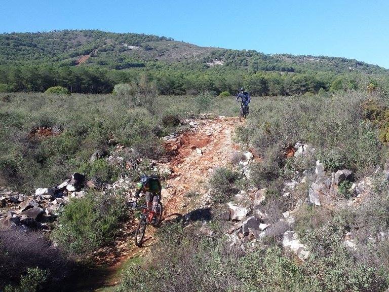 Coín Woods steep shoot
