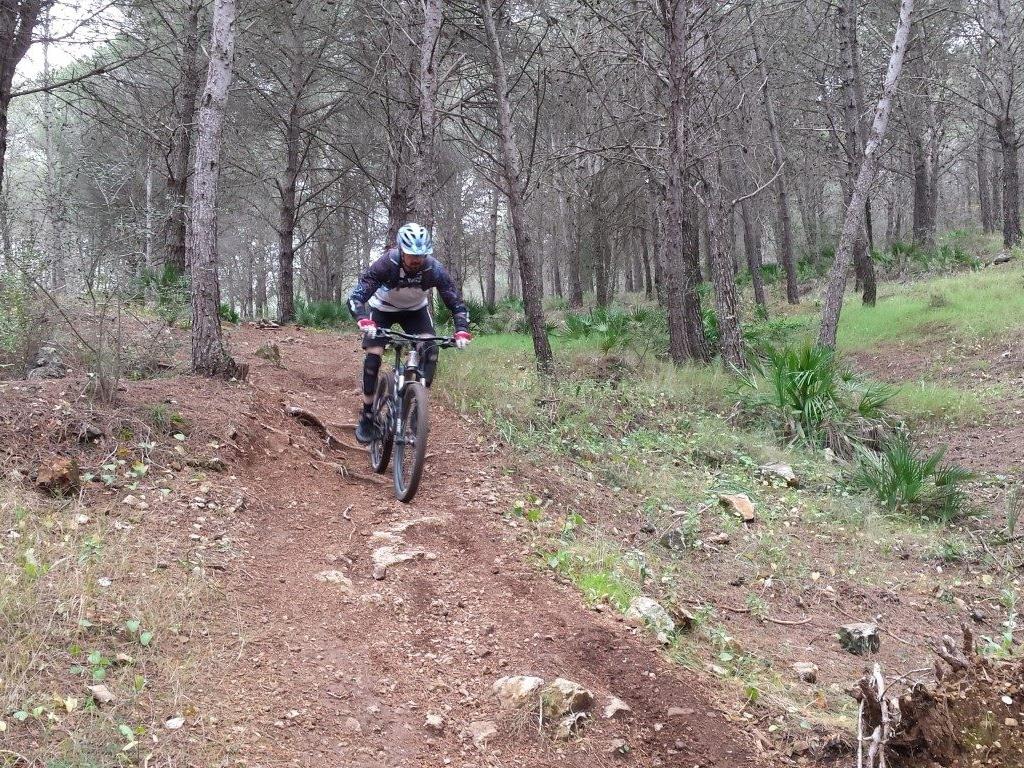 Coín Woods forest descent