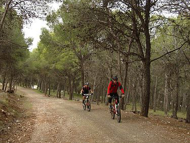 Alhaurin Forest dirt road