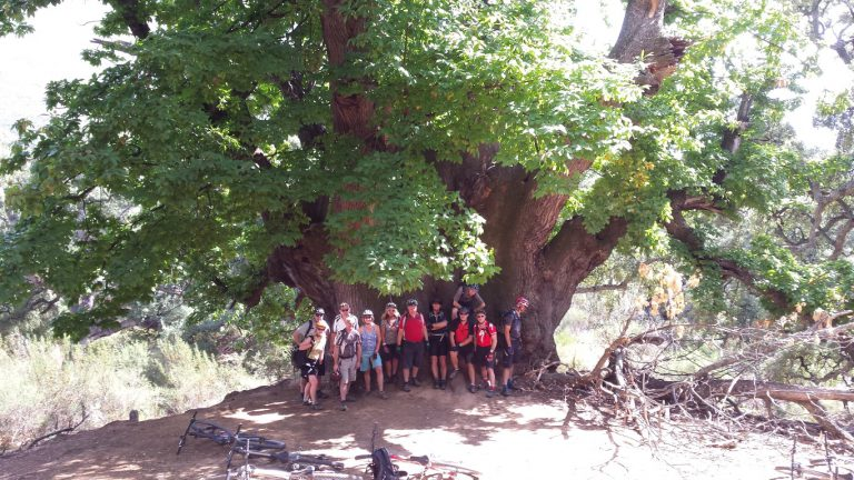 Serranía de Ronda big group posing in front of the millenary Castaño Santo, the Holy Chestnut