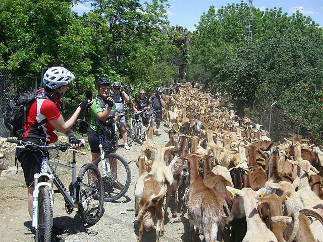 Rio Grande waiting for large herd of goats to pass