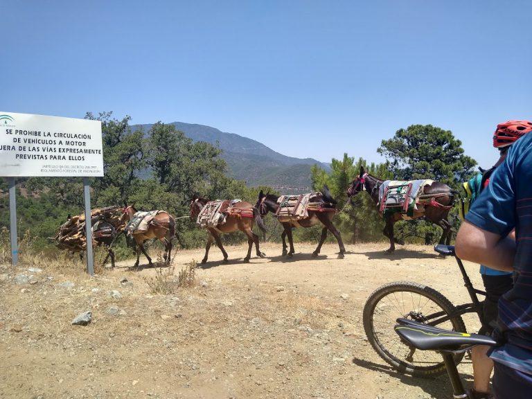 White Village Tour of Andalucia horses and donkeys
