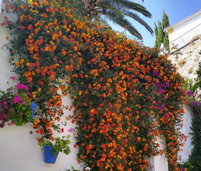 Via Verde del Aceite typical andalusian wall with colourful plants and flower pots