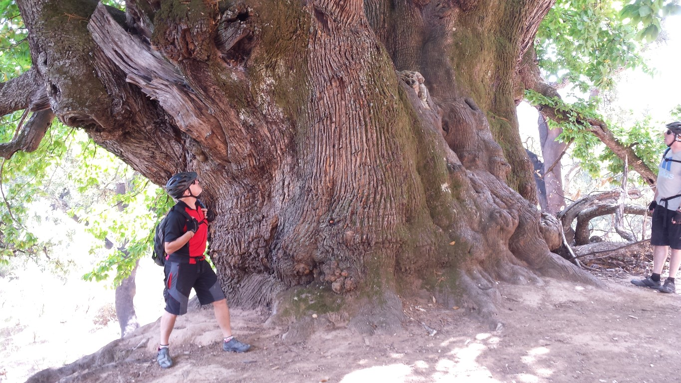 Ronda Descent posing in front of the millenary Castaño Santo tree, the Holy Chestnut