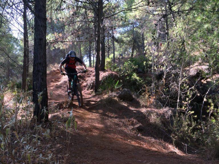 Alhaurin Woods singletrack