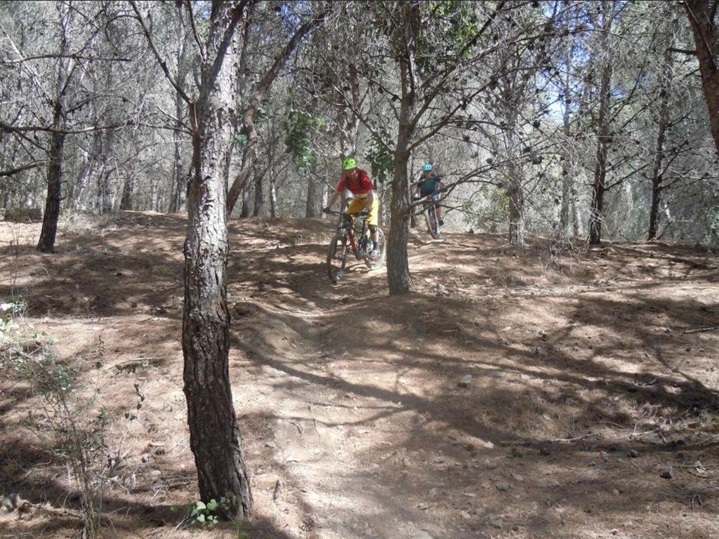 Three Amigos smooth flowy trail through shady forest