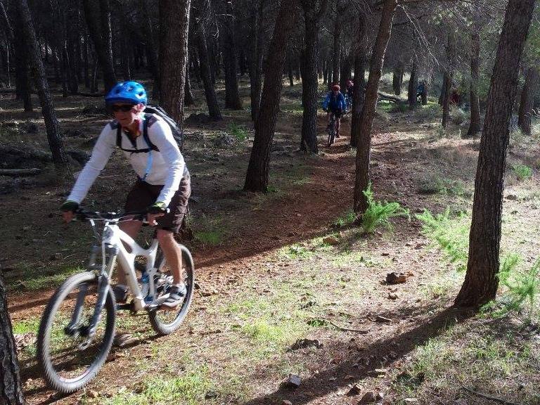 Alhaurin Woods singletrack between trees